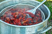 Crawfish Art - Hot Tubn by Bo Lamey