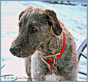 Wolfhound Framed Prints - Hound Framed Print by Ann Butler