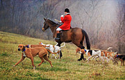 Foxhunting Posters - Hounds at Play Poster by Kate Mitchem