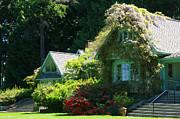 Marilyn Wilson - House at Milner Gardens