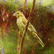Layered Framed Prints - House Finch From Another World Framed Print by J Larry Walker