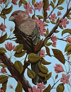 Crab Apple Framed Prints - House Finch Framed Print by Rick Bainbridge