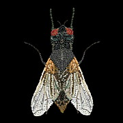 R  Allen Swezey - House Fly Bedazzled