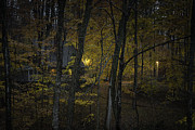 Finger Lakes Art - House In The Woods by Michele Steffey