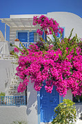 David Birchall - House Of Bougainvillea