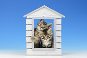Cats Digital Art Prints - House of Kittens CK528 Print by Greg Cuddiford