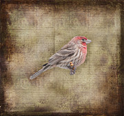 Kathy Rinker - Housefinch Tapestry