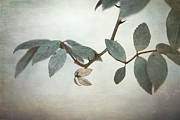 Textured Leaves Posters - How Delicate This Balance Poster by Laurie Search