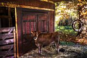 Debra and Dave Vanderlaan - How Now Brown Cow?