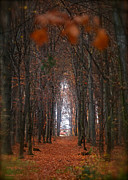 Autumn Photos Originals - How to open door to paradise  Psalm  Viewed 216 Times  by Andrzej Goszcz