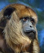 Savannah Gibbs - Howler Monkey
