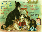 Vintage Beauty Framed Prints - Hoyts Cats Framed Print by Nomad Art And  Design