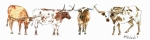 Longhorns Prints - Huddle Up  Print by Kathleen McElwaine