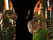 Huge Butterflies In Mindo Print by Al Bourassa