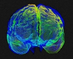 Imaging Photos - Human Brain Variation by Arthur Togaucla