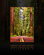 Avenue Of The Giants Prints - Humboldt Redwoods State Park California - Avenue of the Giants - HDR Print by David Rigg