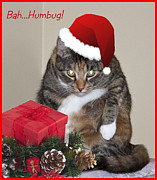 Humbug Photos - Humbug by Cathy Kovarik