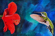 John W Walker Framed Prints - Humming Bird and Hibiscus Framed Print by John W Walker