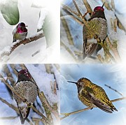 Nick Kloepping - Humming Bird and Snow 4...