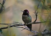 Xueling Zou - Hummingbird 3