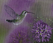 Cleome Flower Prints - Hummingbird and Cleame Print by Kassia Ott