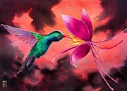 Original Watercolor Painting Posters - Hummingbird And Columbine Poster by Robert Hooper