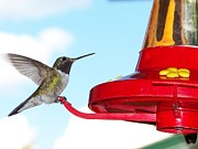 Cherie Haines - Hummingbird and Feeder