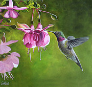 Hummingbird Paintings - Hummingbird and Fuschia by Debbie Hart
