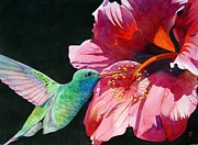 Watercolor  Paintings - Hummingbird And Hibiscus by Robert Hooper