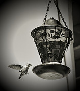 Cindy Nunn Art - Hummingbird BW 1 by Cindy Nunn