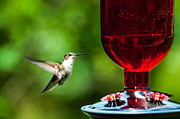 Debra Vronch Metal Prints - Hummingbird Delight Metal Print by Debra Vronch