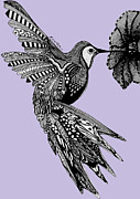 Lilac Drawings - Hummingbird Flight 10 by Karen Larter