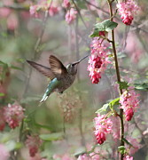 Garden Animals Posters - Hummingbird Heaven Poster by Angie Vogel