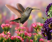 William Lee - Hummingbird in colorful...