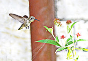 Allan Einhorn - Hummingbird in Flight