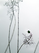 Hummingbird Photos - Hummingbird in Fog 2 by Rebecca Cozart