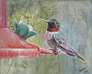 Hummingbird Pastels - Hummingbird in Oil by Brenda Maas