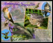 Juveniles Prints - Hummingbird Inspiration Print by Kim Michaels