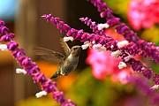 Adam Jewell - Hummingbird Landscape