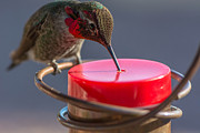 Michael Moriarty - Hummingbird on Feeder
