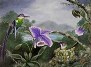 Passion Fruit Painting Prints - Hummingbird Paradise Print by Amanda  Stewart