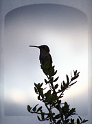 Tropical Bird Art Print Posters - Hummingbird Silhouette Sunrise art print Poster by Ella Kaye