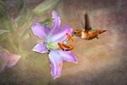 Stamen Digital Art Framed Prints - Hummingbird Sweets Framed Print by Mary Timman