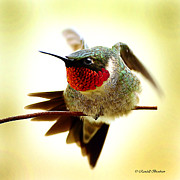 Randall Branham Prints - Hummingbird Walking Wire Print by Randall Branham