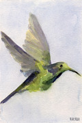 Hummingbird Prints Prints - Hummingbird Watercolor Bird Painting Print by Beverly Brown Prints