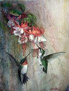 Hummingbird Pastels - Hummingbirds and Fuschias by John F Willis