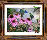 Blooming Digital Art Prints - Hummingbirds Print by East Coast Barrier Islands Betsy A Cutler