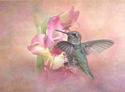Fledgling Posters - Hummingbirds Gladiola Poster by Angie Vogel