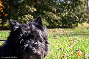 Cairn Terrier Photos - Humor Me by Susan Herber
