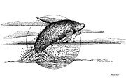Humpback Drawings Posters - Hump Back Whale Poster by Brian Gilna